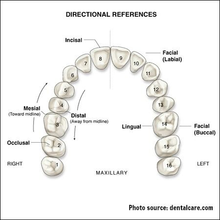 Dental fillings in fridley mn dentistry for the entire family surfaces of the teeth diagram ccuart Images